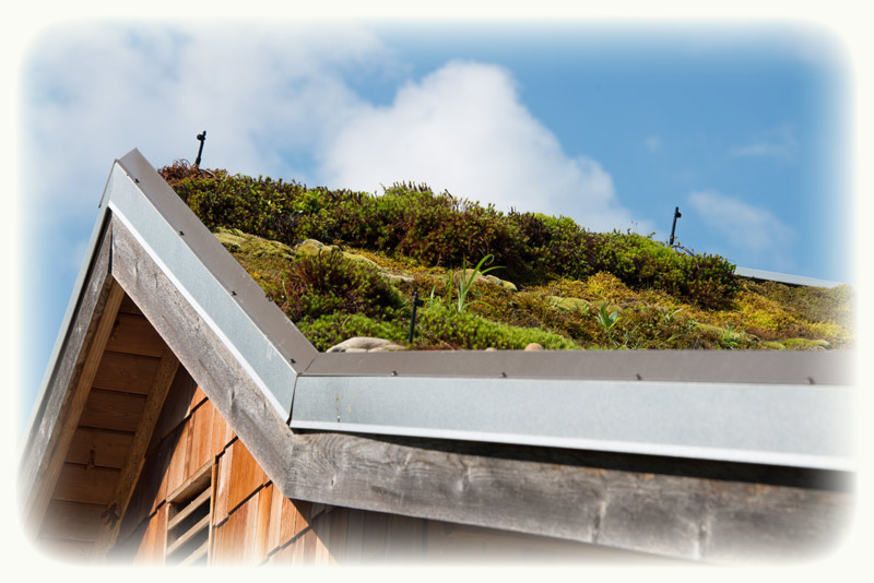 Green roofs and the making of for Sustainable roofing materials